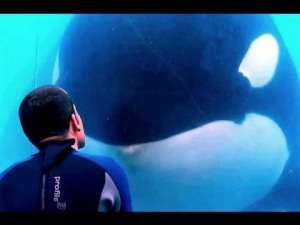REMINDER: Awesome killer whale doc 'Blackfish' airs tonight on CNN
