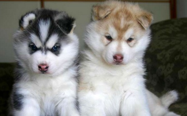 Puppies, you guys. The test could involve lighting myself on fire and I would finish it.