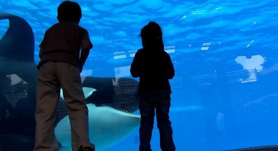 Blackfish-ominouswhale