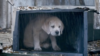 Here's The Sequel To Last Year's Adorable Budweiser Super Bowl Puppy Commercial