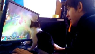 Watch A Kitten Utterly Ruin This Guy's 'League Of Legends' Video Game