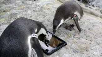 Watch Some Penguins Chill With An iPad