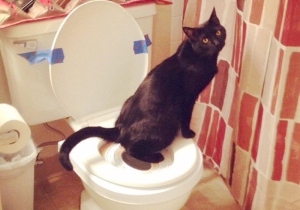 A Woman Attempted To Toilet Train Her Cat And It Went Horribly, Horribly Wrong