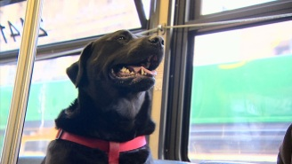This Wonderful Dog Takes The Bus To A Seattle Dog Park All By Herself
