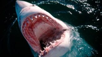 Evil Sharks Are Eating The Internet In Vietnam