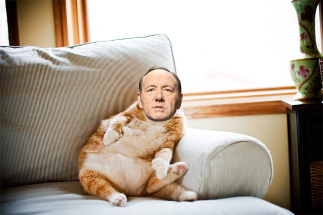 Spacey-Cat