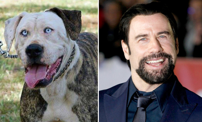 travolta-dog-header