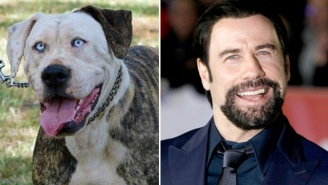Everybody Meet John Travolta Dog, The Dog That Looks Like John Travolta
