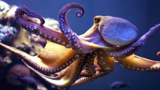 This Adorable Little Robot Octopus Is The Fastest Underwater Vehicle