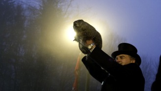 Police In Merrimack, New Hampshire Just Issued An Arrest Warrant For Punxsutawney Phil