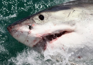 Shark Races Will Soon Be A Thing In Florida And Here Is Why That Is Awesome