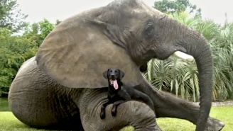 Android's Newest Commercial Is Full Of Adorable Interspecies Friendships