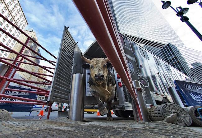 Bull Outside Madison Square Garden