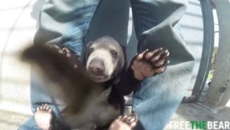 Watch This Injured Bear Cub Learn To Walk, Climb, And Give Bear-Kisses