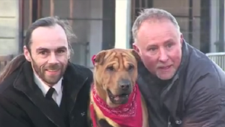 The Dog Abandoned At A Scottish Train Station Found A New Home