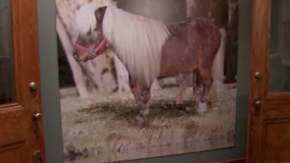 A Fun Li'l Story About Everyone's Favorite Miniature Horse From 'Parks And Recreation'