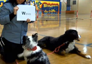 This Lady Taught Her Dog To Read And Wants To Teach Other Dogs Too