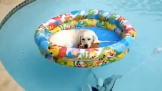 This Dog Floating In A Swimming Pool Has Got The Right Idea