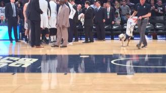 The Butler Bulldog Puked And Rallied Before A Big East Game