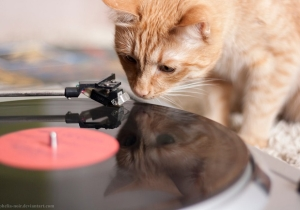 Important Research Discovers What Music Cats Prefer