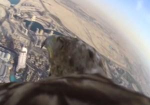 Here's Video Of An Eagle Flying Around The Burj Khalifa In Dubai
