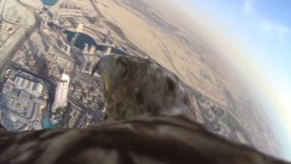 Here's Video Of An Eagle Flying Around The Burj Khalifa In Dubai