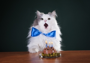 Meet The World's Oldest Living Cat Who Just Celebrated Her 27th Birthday
