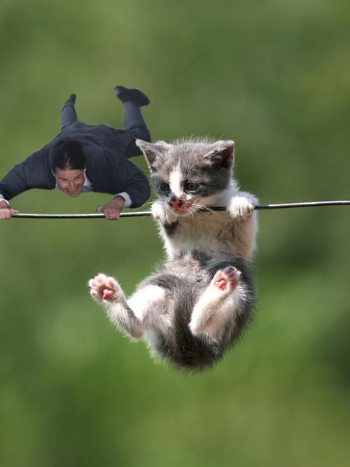 Tom-cruise-kitten