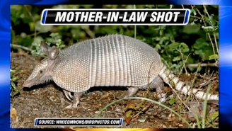 A Man Accidentally Shot His Mother-In-Law While Trying To Shoot An Armadillo