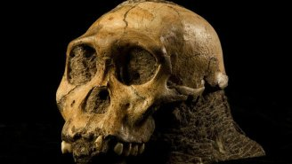Much Of What We Knew About Early Human Evolution Might Be Wrong