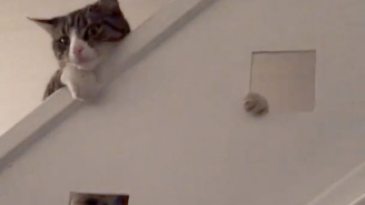 Watch This Feisty House Cat Accidentally Slide Down The Bannister