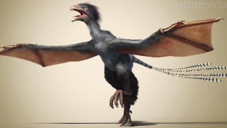 Newly Discovered Dinosaur Has A Short Name And Fuzzy Bat Wings