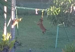 Here's A Dog Playing On Swing Set Made Just For Dogs