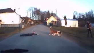 Watch This Russian Dash Cam Footage Of A Dog Walking A Child
