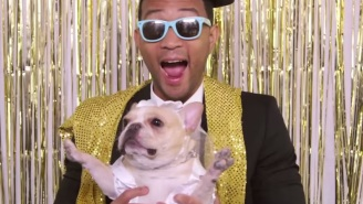If You Wanted John Legend To Sing At The Dog Wedding Of Your Dreams, This Is The Chance Of A Lifetime