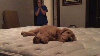 This Woman Absolutely Loses It When Her Boyfriend Surprises Her With An Adorable Puppy