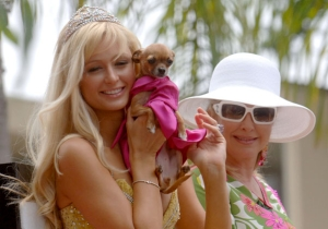 Let's Pour One Out For Paris Hilton's Beloved Chihuahua Tinkerbell (2001-2015)