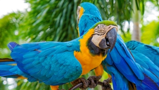 A Woman Crashed Her Car And Blamed Her Coffee-Loving Parrot