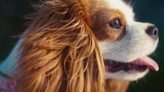 Watch J. Coles 'Wet Dreamz' video: Puppy love