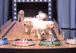 Watch These Adorable Puppies Predict The Winner Of The 2015 Final Four Championship
