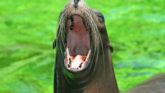 Meet The Fisherman Who Learned Not To Mess With Sea Lions