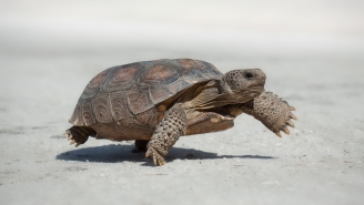 Floridians Are Accidentally Killing Tortoises By Mistaking Them For Sea Turtles