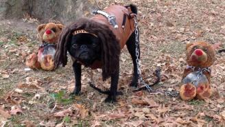 This Pug Dressed As Michonne From 'The Walking Dead' Is The Pug You Deserve