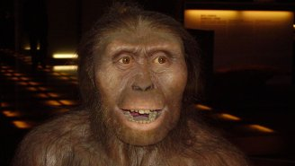 We've Found A New Human Ancestor, And It's Changing How We View Human Evolution