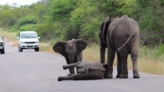 Watch An Entire Herd Of Elephants Help A Baby Elephant Who's Just Too Tired To Walk