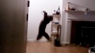 Watch This Guy's Cat Catch A Bat That Was Loose In The House In Mid-Air