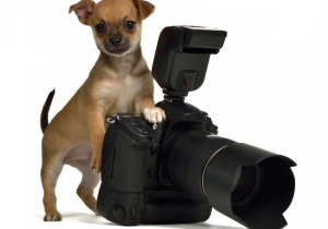 This New Camera Feature Will Turn Your Dog Into A Photographer, No Training Required