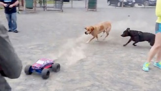 These Dogs Chasing An RC Monster Truck At The Dog Park Are Having The Most Fun Ever