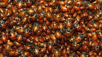 These Students Are In Big Trouble For A Senior Prank Involving 72,000 Ladybugs