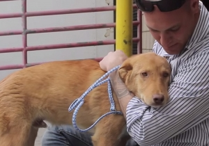 Watch This Dog's Heartwarming Reunion With The Marine Who Rescued Him